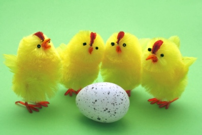 easter-chickens-5-1403338